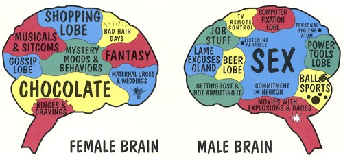 Image result for the male and female brain